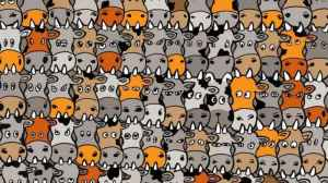 encontre-o-cachorro-entre-as-vacas-300x168