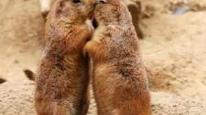 curiosidades sobre o beijo