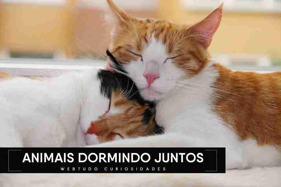Fotos de animais fofos dormindo juntos