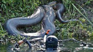anaconda rio amazonas