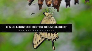 casulo de borboleta