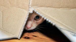 animais em esconderijo