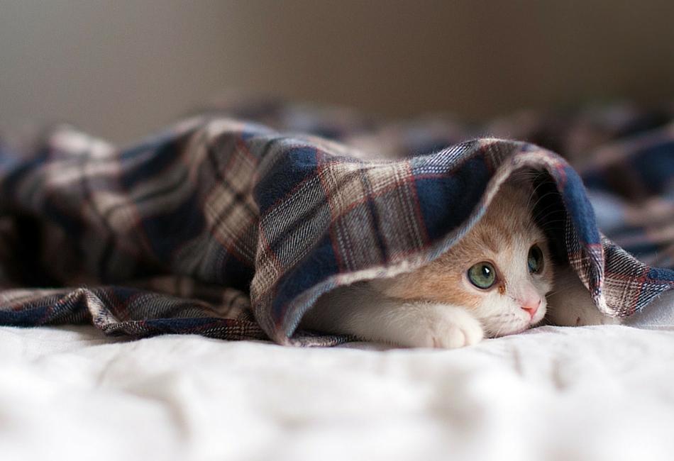 animais que acreditam ter encontrado o esconderijo perfeito