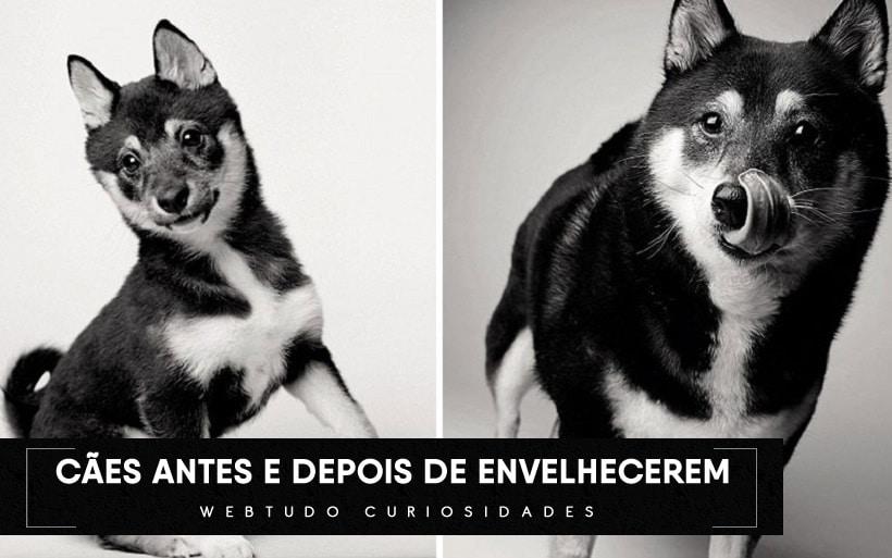 Um projeto de fotografia mostra como os cães envelhecem