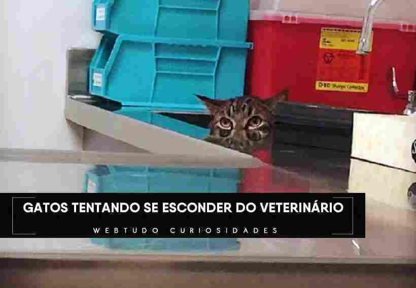 Imagens engraçadas de gatos se escondendo do veterinário